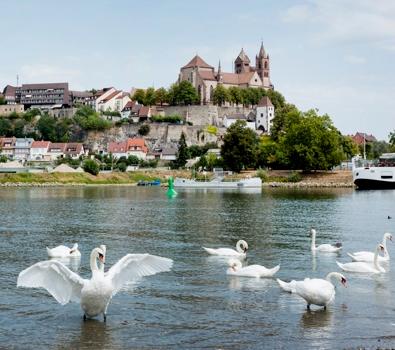 Stadt Am Rhein Baden 4 Buchstaben